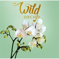 Wild orchid BE duftpinner 125 ml