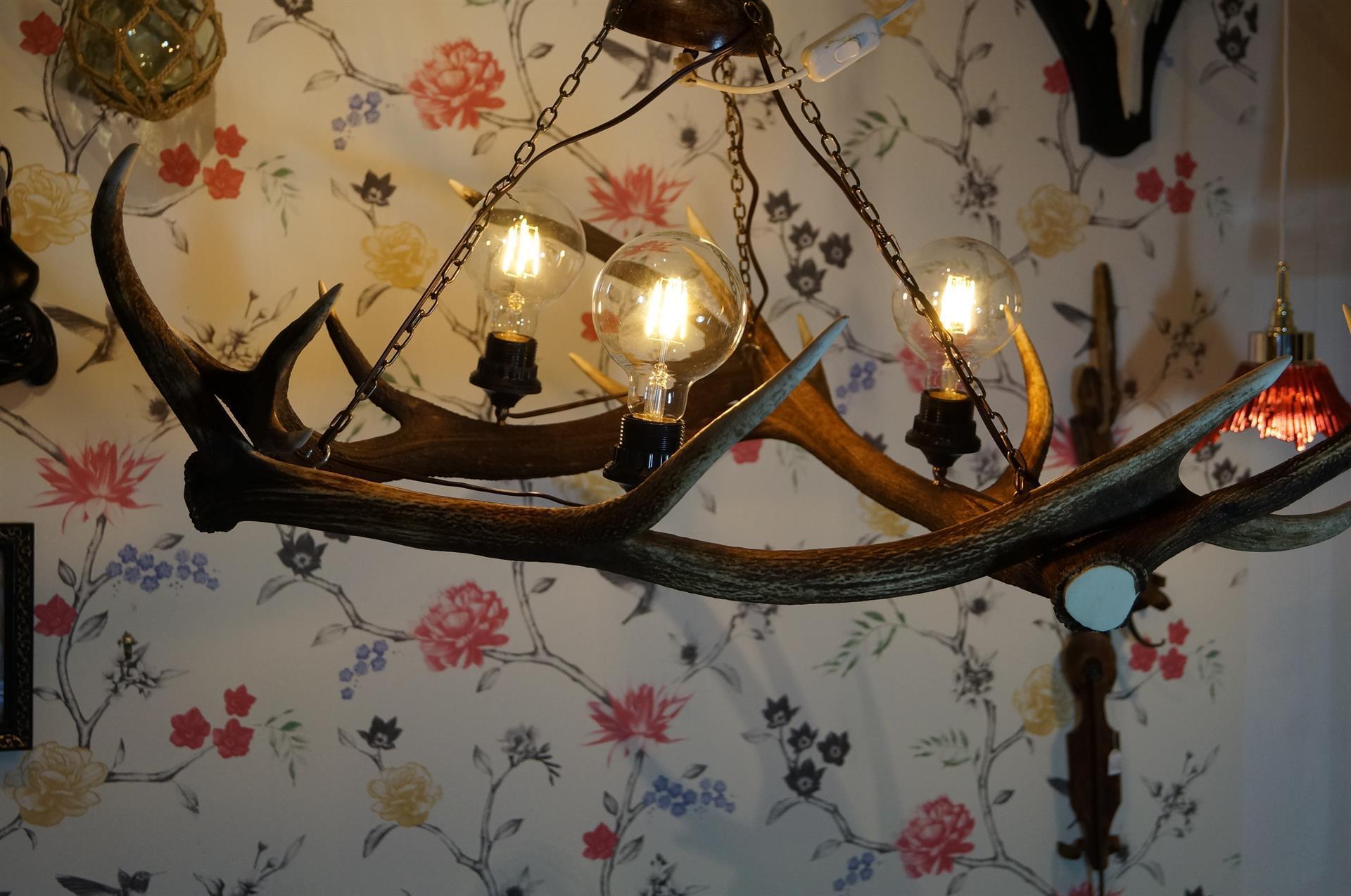 ljuskrona älghorn