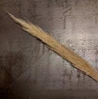 Pampasgräs