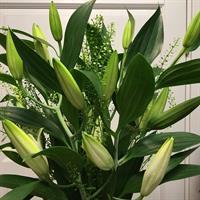 Vita liljor och grönt