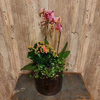 Orkidéplantering