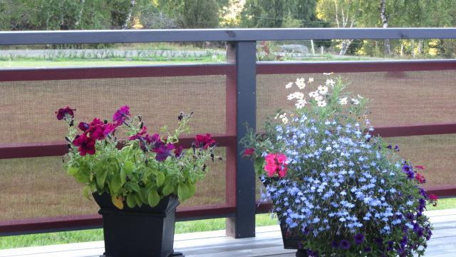 Blommorna får bra ljus & skydd