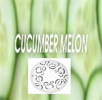 Fan-Y refill Gurka & Melon