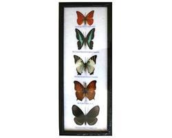 Fjärilar - 5st i ram (5 pack)