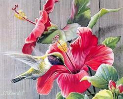 Diamond Painting, Hawaiiblomst 40*50cm, kvadrat FPK