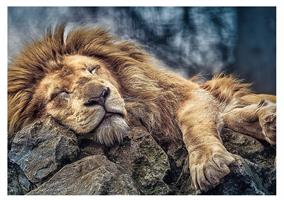Puslespill Løve 1000 brikker