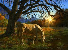 Puslespill Hest i solnedgang 1000 brikker