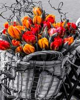 Diamond Painting, Tulipaner i kurv 40*50cm FPR