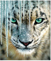 Diamond Painting, Leopardansikt 39*49,5cm FPR
