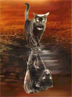 Diamond Painting, Katt m/speilbilde 40*50cm FPK