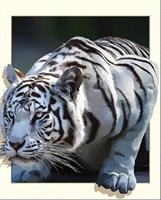 Diamond Painting, Tiger ut av ramme sort/hvit 30*40cm (Fv2883) FPK