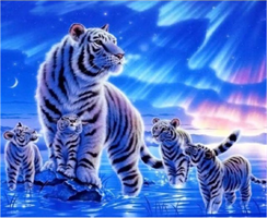 Diamond Painting, Tiger m/barn 50*40cm GLITTER