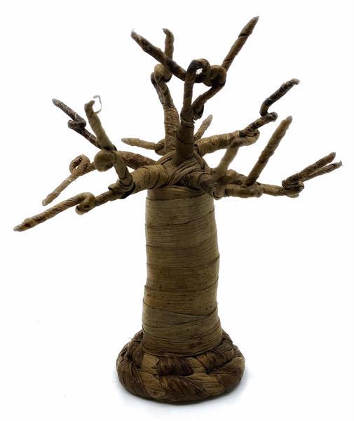 Baobab träd från Kenya 20cm (2 pack)