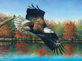 Puslespill Wetlands Eagle 1000 brikker
