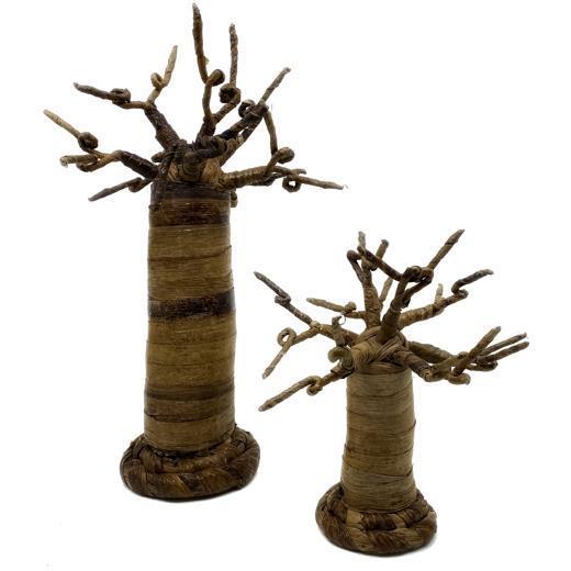 Baobab träd från Kenya 30cm (2 pack)
