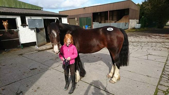Nyinköpt på hästauktion på Irland.