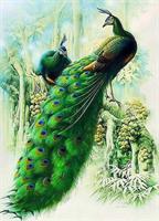 Diamond Painting, Påfugl par 40*50cm FPR