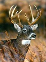 Male etter nummer, Hjort 40*50cm (C4350)