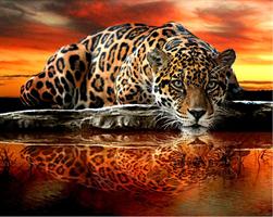 Diamond Painting, Tiger v/vann 40*50cm GLITTER