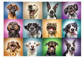Puslespill Funny Dog, 1000 brikker