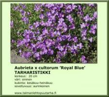 Tarharistikki 'Royal Blue'