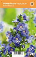 LEHTOSINILATVA BAMBINO BLUE