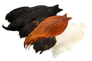 4 B's Rooster Cape
