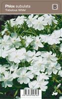 SAMMALLEIMU FABULOUS WHITE