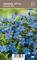 SINILEMMIÖ HEAVENLY BLUE