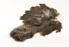 Brahama Hen Soft Hakle w/Chickabou Mottle Gray