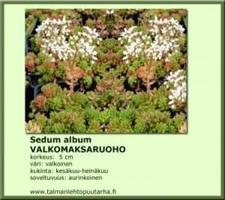 Valkomaksaruoho album