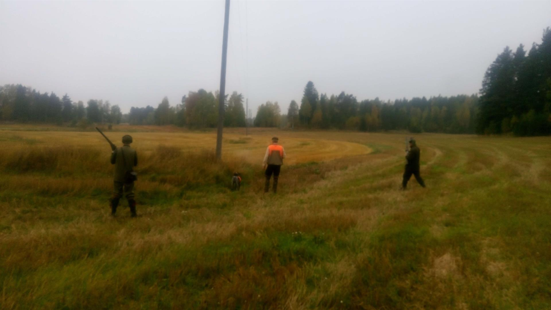 Peltopyyjahtia Norrby Gårdissa