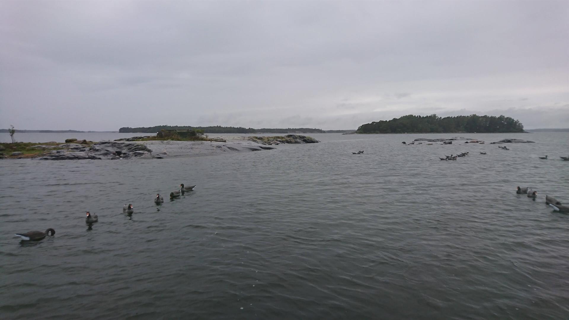 Hanhijahtia Norrby Gårdissa