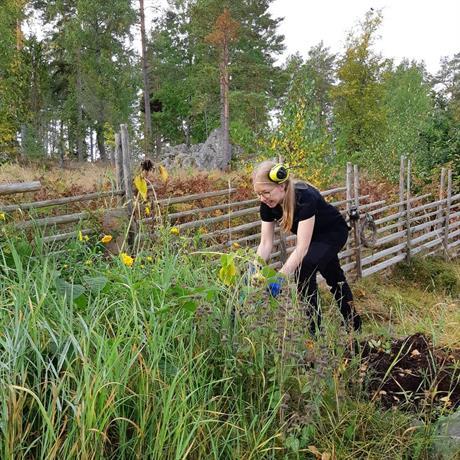 SVIS städ rut-tjänster trädgårdsarbete