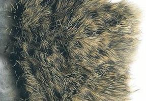 Hare - kroppshår på skinn