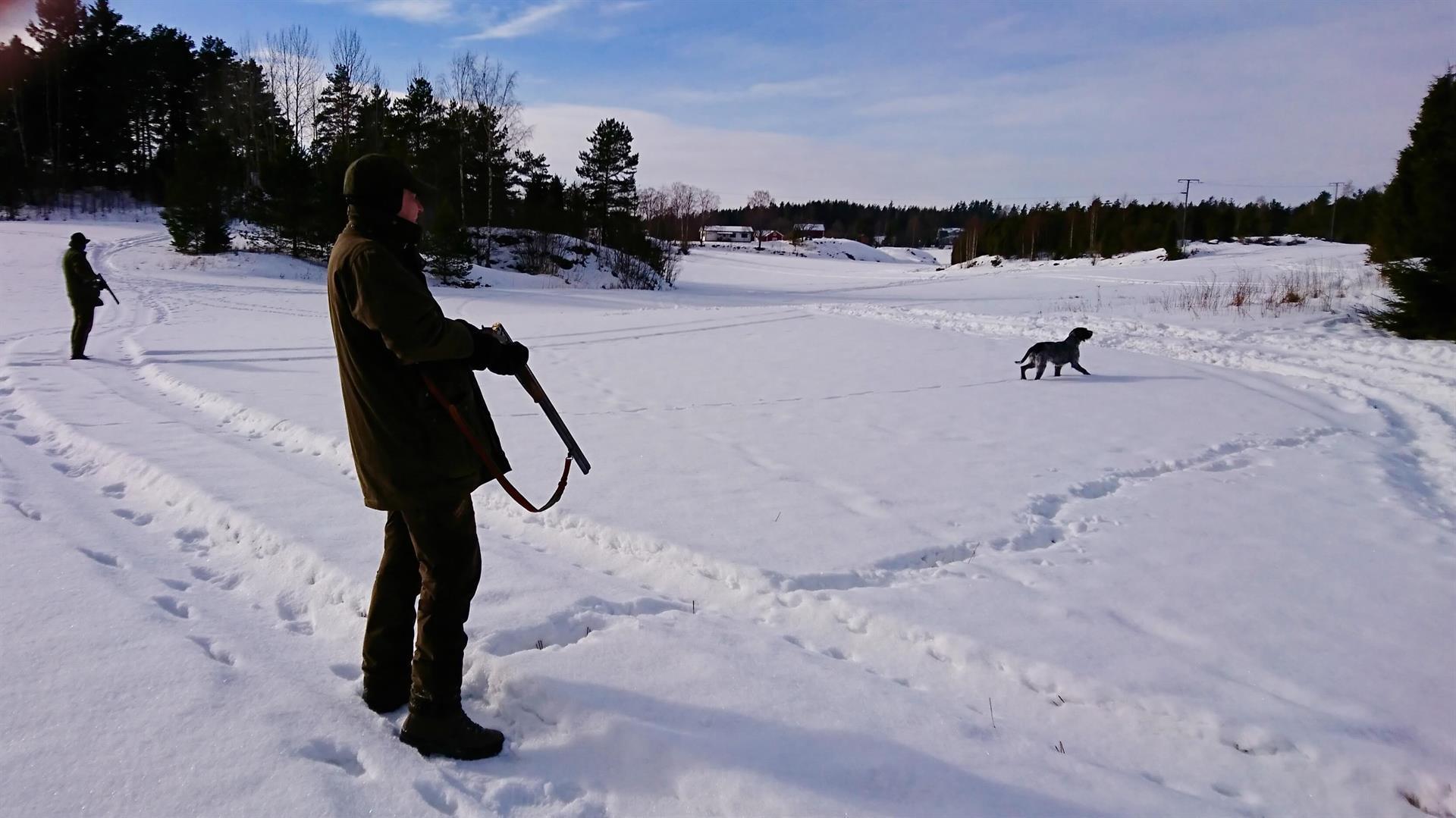 Fasaanijahtia seisovilla Norrby Gårdissa