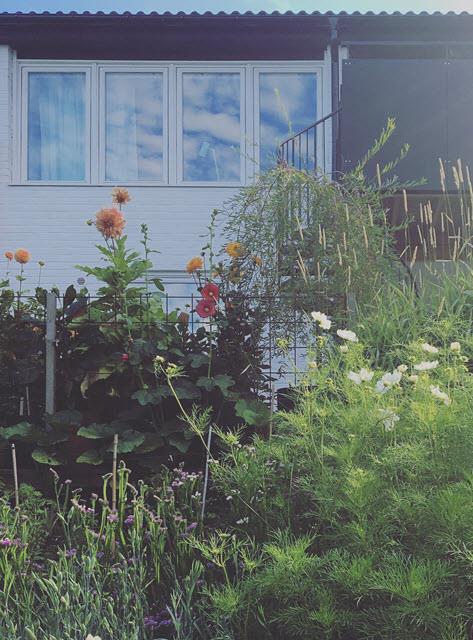 18 maj: Öppen trädgård