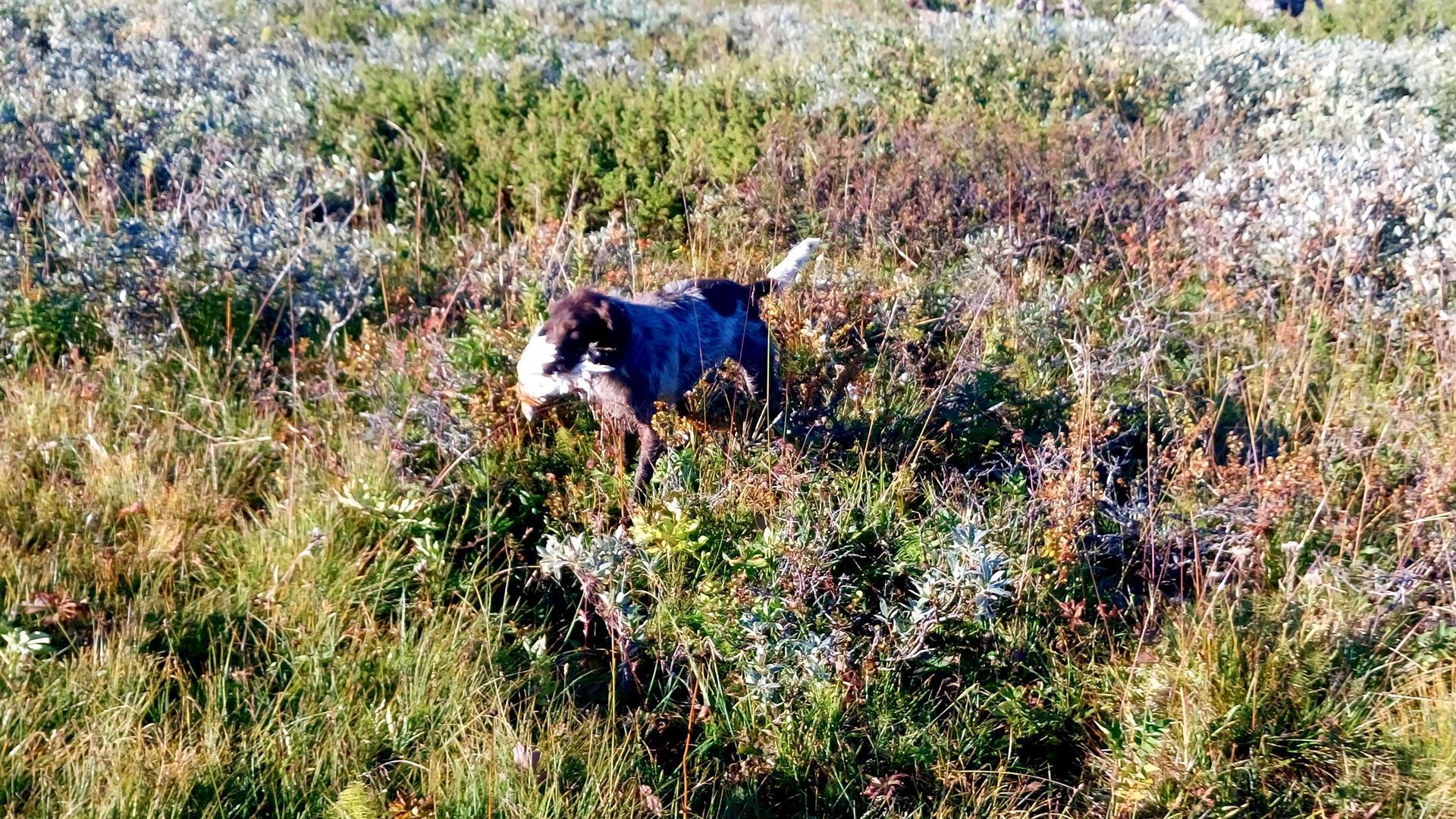 Metsästysmatkat Ruotsi syksy
