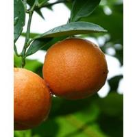 Orange 100 % Essential Oil 10 ml