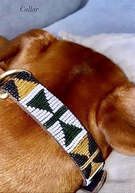 Hundehalsbånd med nye farger!